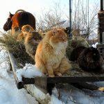 Catland Russia
